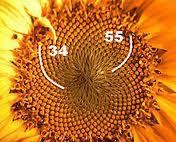 Fibonatschi