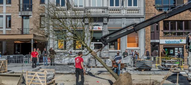 boom-grote-markt1